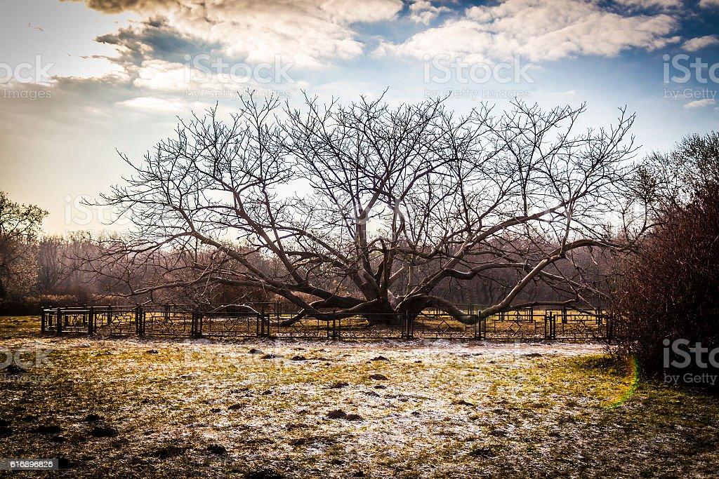 Scary bare tree stock photo