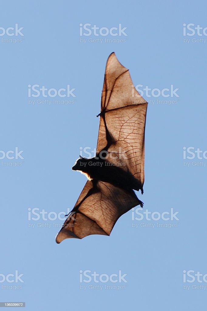Scary Bat stock photo