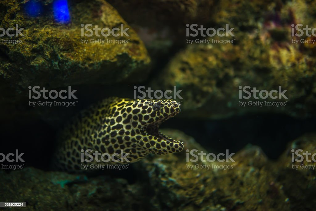 Scary eel in aquarium stock photo