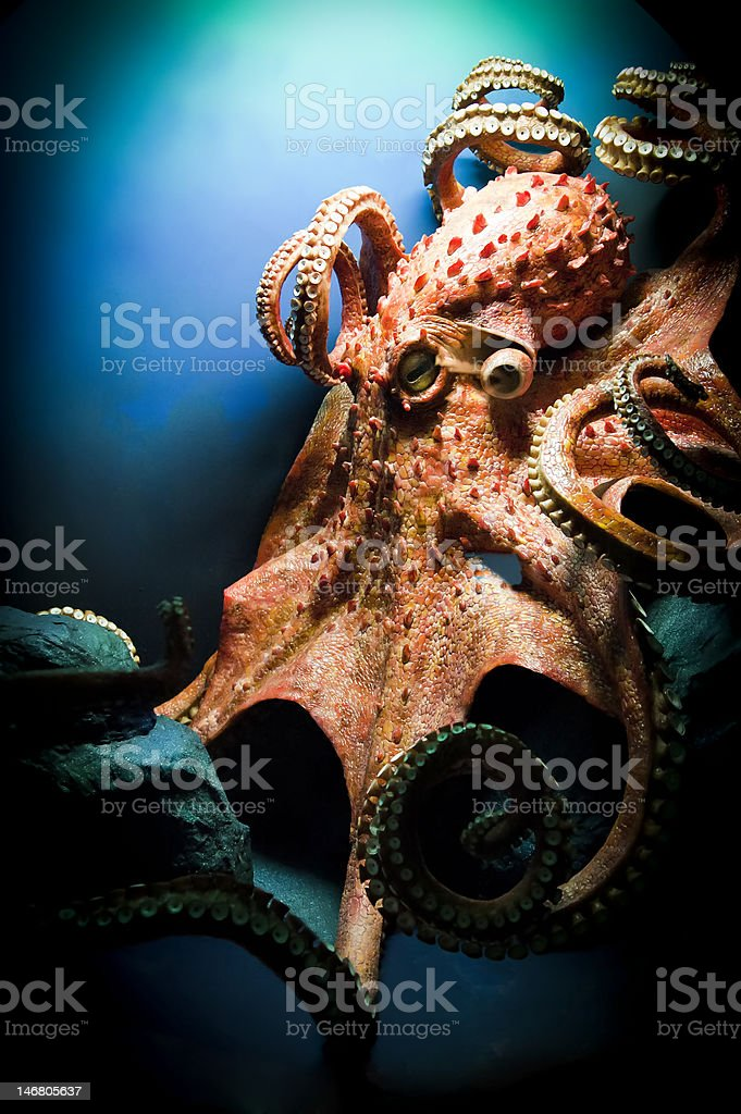 Scary Giant Octopus stock photo