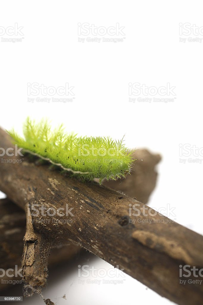Scary Green Caterpillar royalty-free stock photo