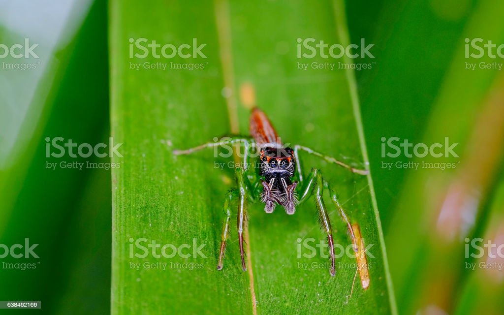 Scary looking black spider stock photo