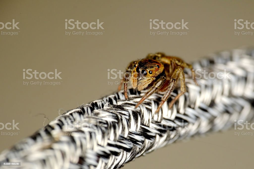 Scary looking brown spider stock photo