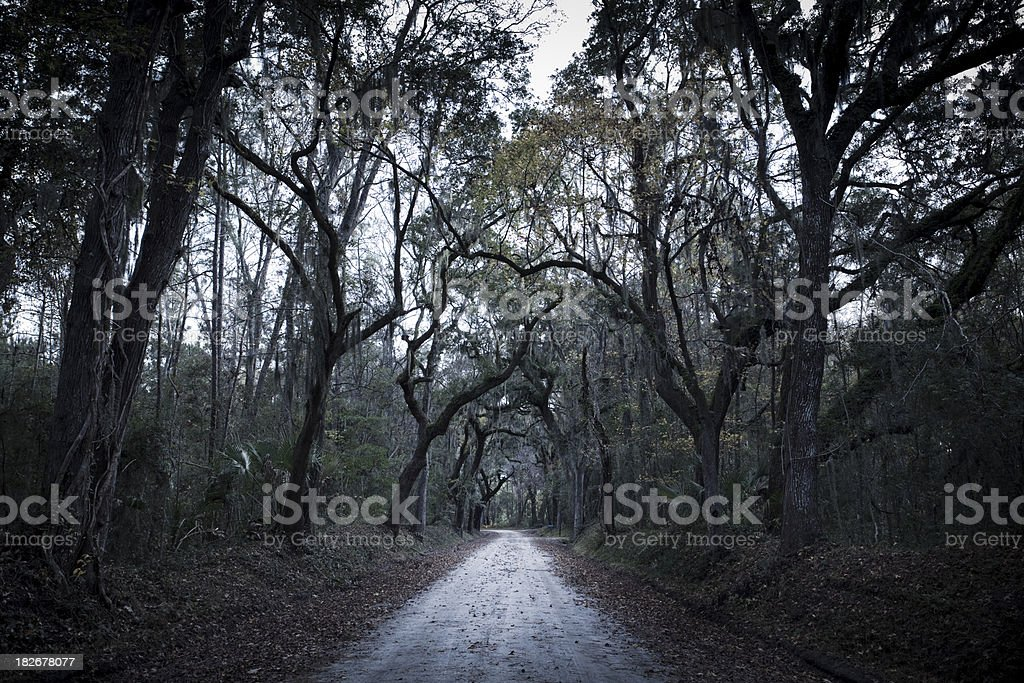 Scary plantation forest dirt road royalty-free stock photo