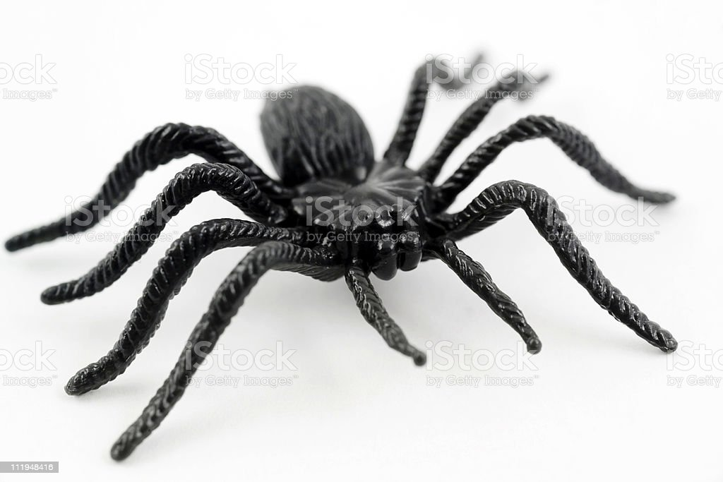 Scary plastic spider for halloween stock photo