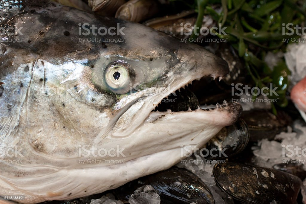Scary salmon head stock photo