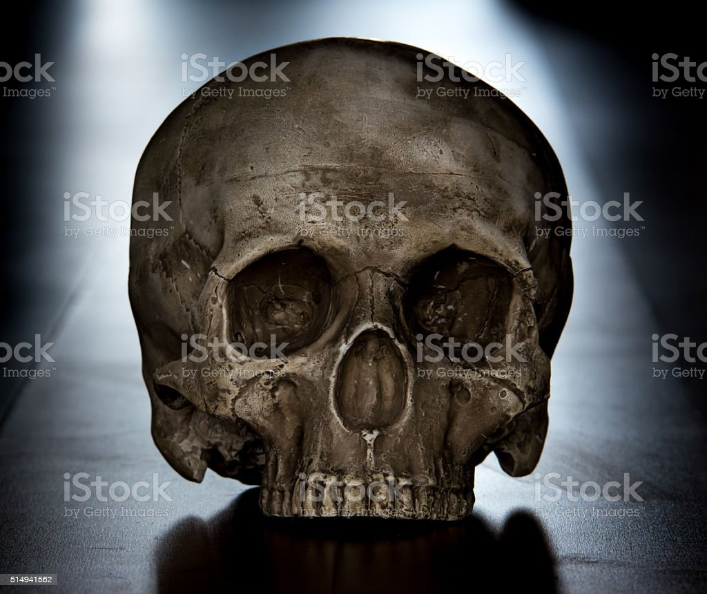 Scary scull. stock photo