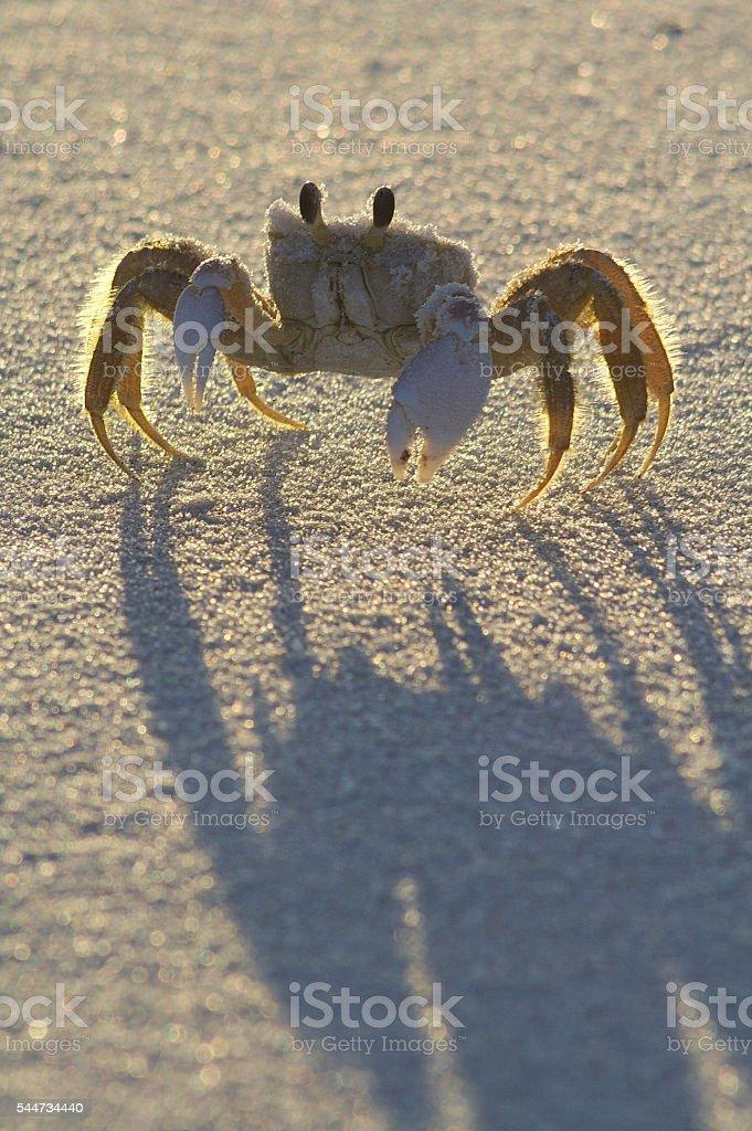 Scary Shadow stock photo