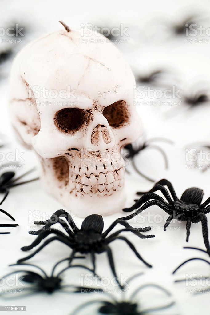 Scary skull and plastic spiders for halloween stock photo