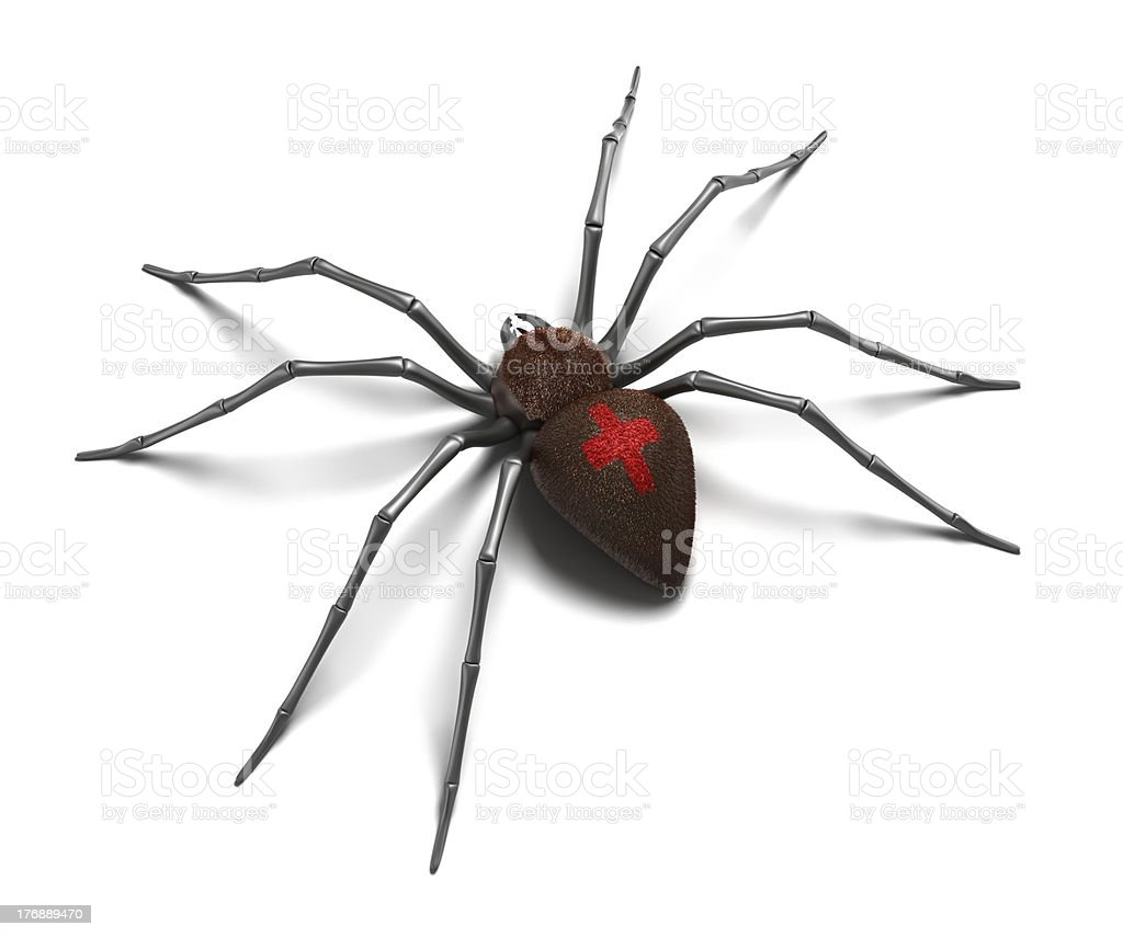 Scary Spider : Black Widow. stock photo