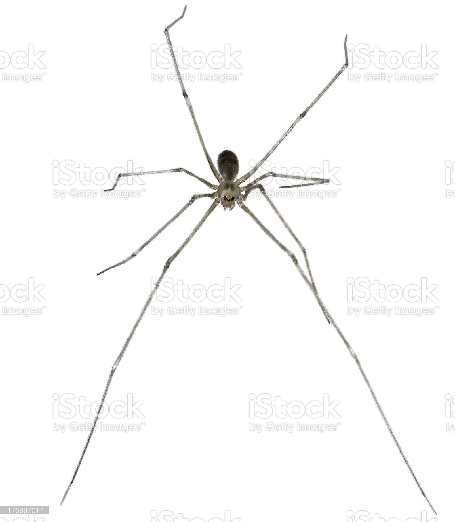 scary spider royalty-free stock photo
