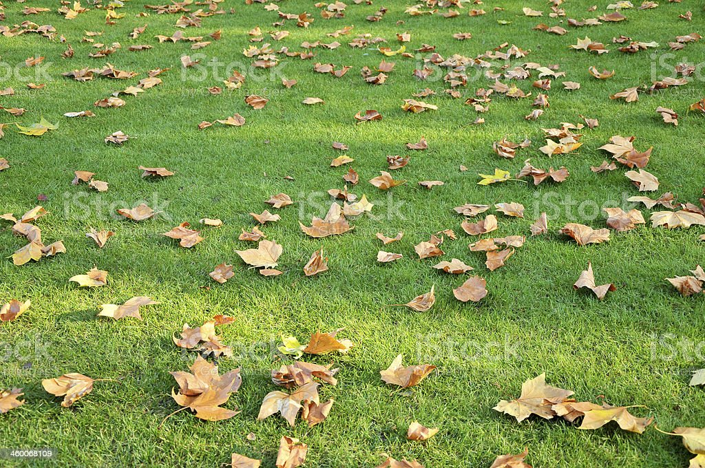Scattered autumn leaves on grass stock photo
