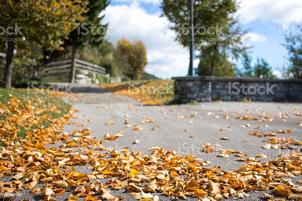 Scattered colorful autumn leaves on a road stock photo