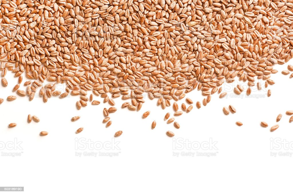 Scattered grains of wheat stock photo
