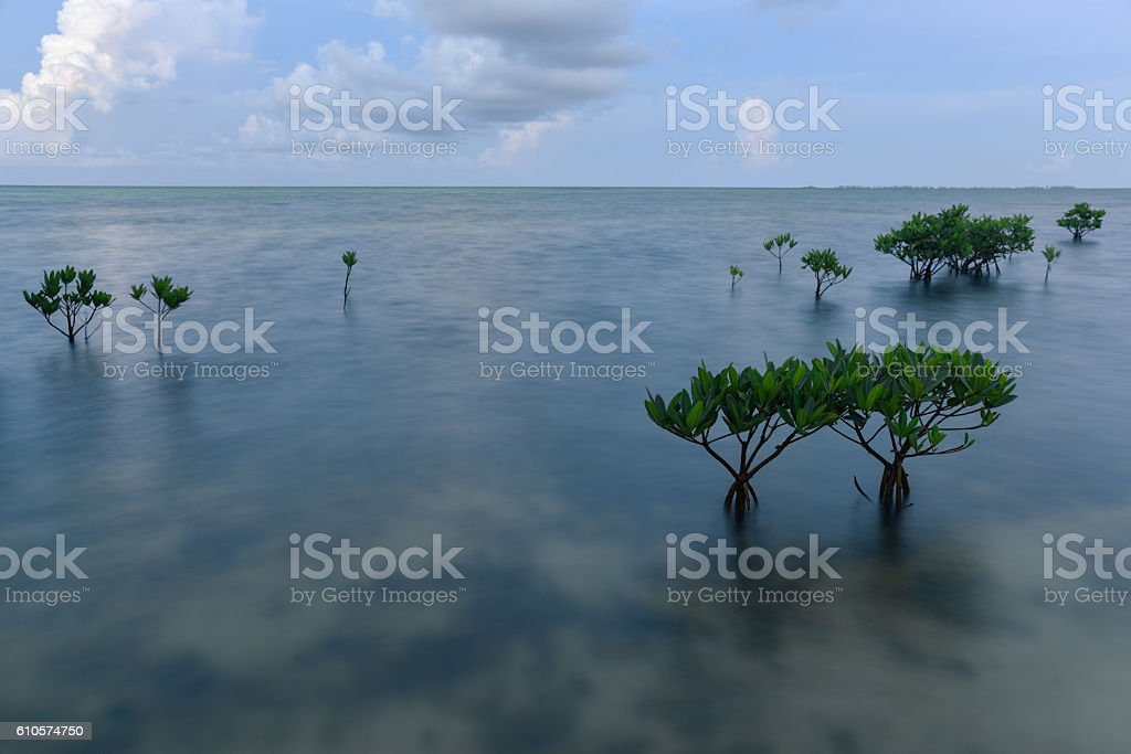Scattered Mangroves in Cayman stock photo