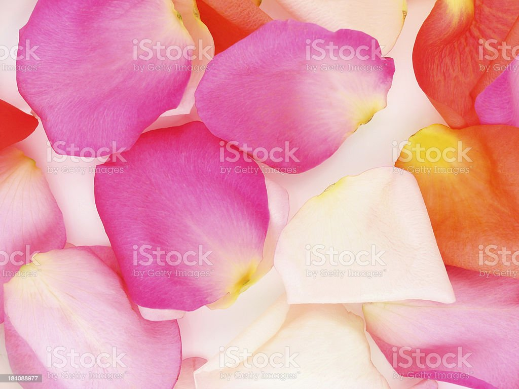 Scattered Rose Petal Background royalty-free stock photo