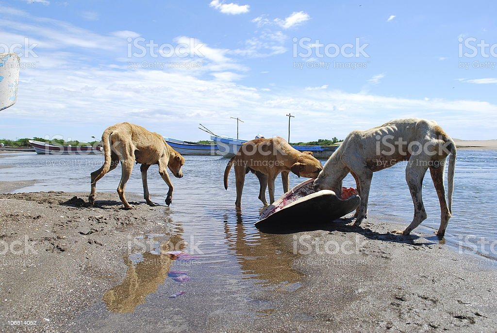 Scavenging on the Beach stock photo
