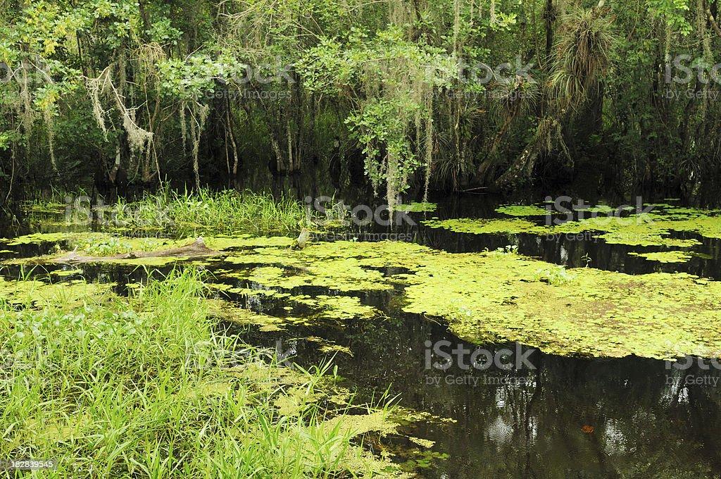 Scene at Kirby Storter Boardwalk Big Cypress Nature Preserve Florida royalty-free stock photo