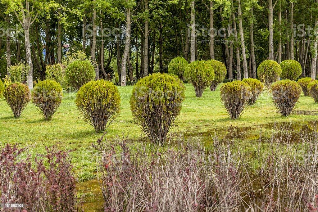 scene of garden royalty-free stock photo