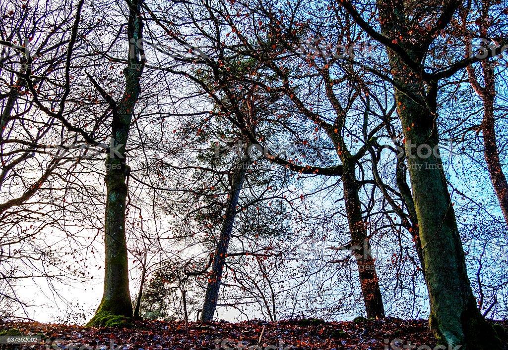 Scene with Backlit Tree II stock photo