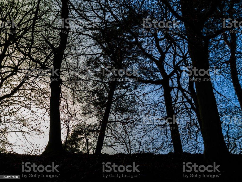 Scene with Backlit Tree stock photo