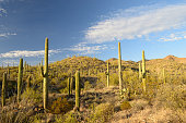 Scenery at Saguaro National Park