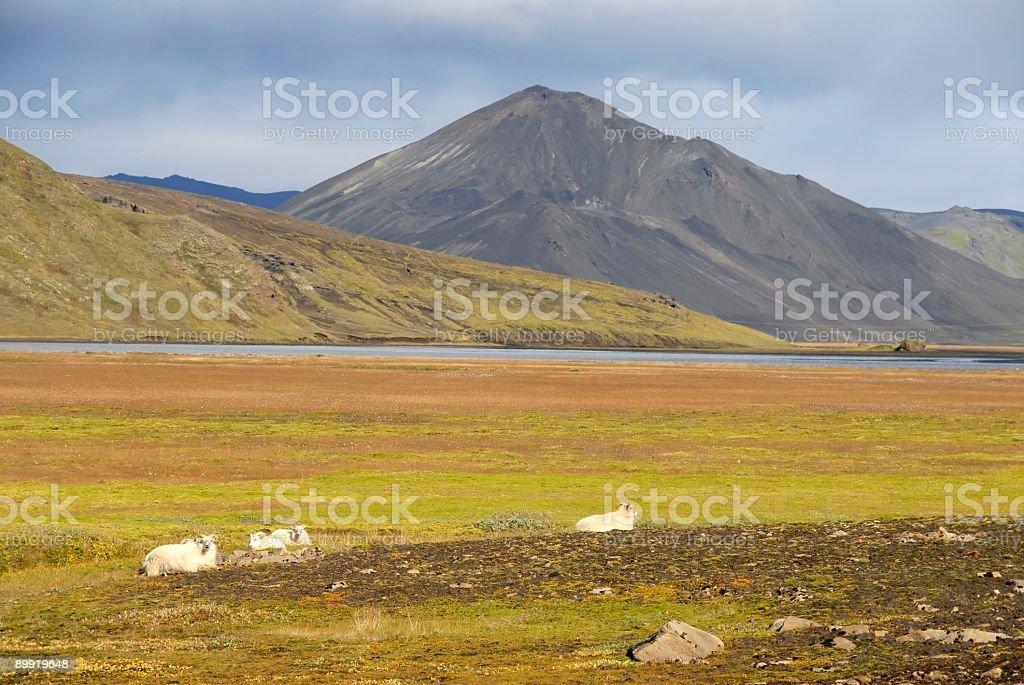 Scenery in Landmannalaugar,Iceland. stock photo