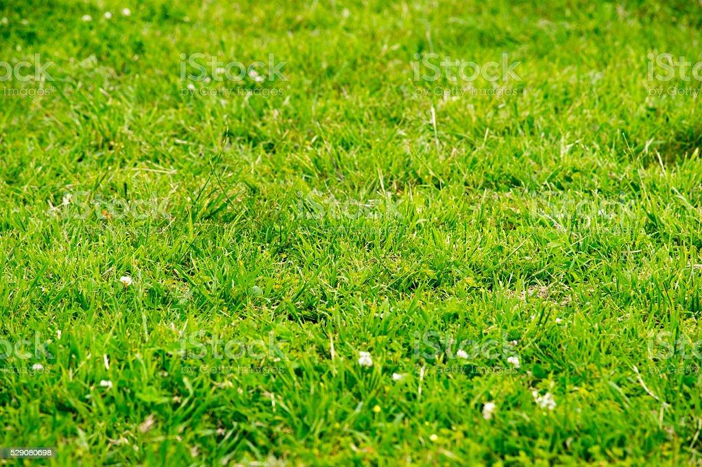 Paysage matière de la pelouse photo libre de droits