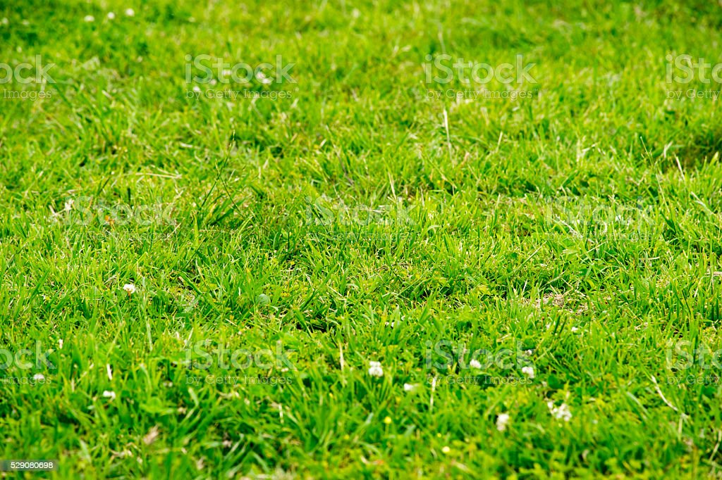 Scenery material of the lawn stock photo