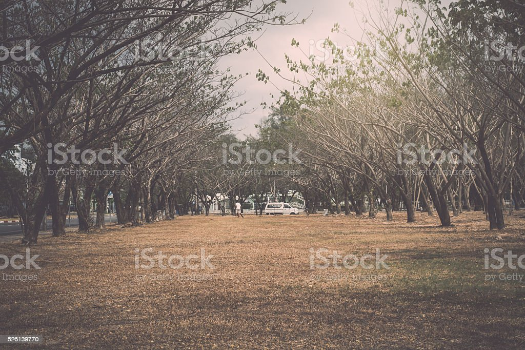 Scenery of public park during summer stock photo