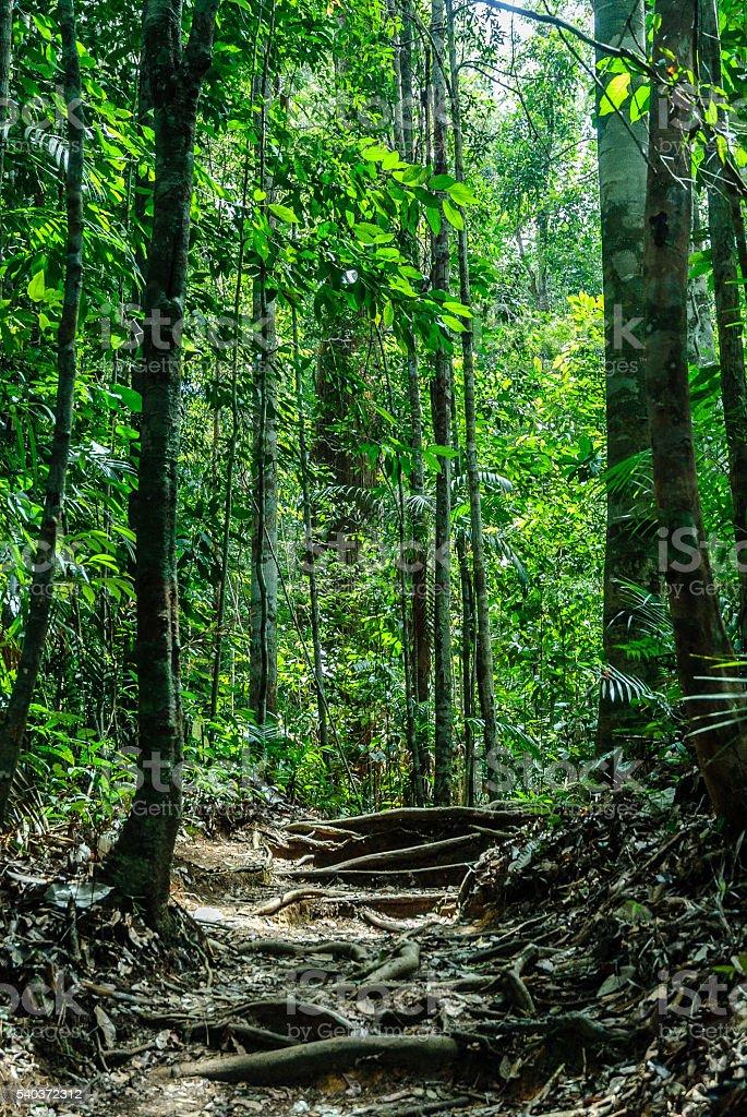 scenery stock photo