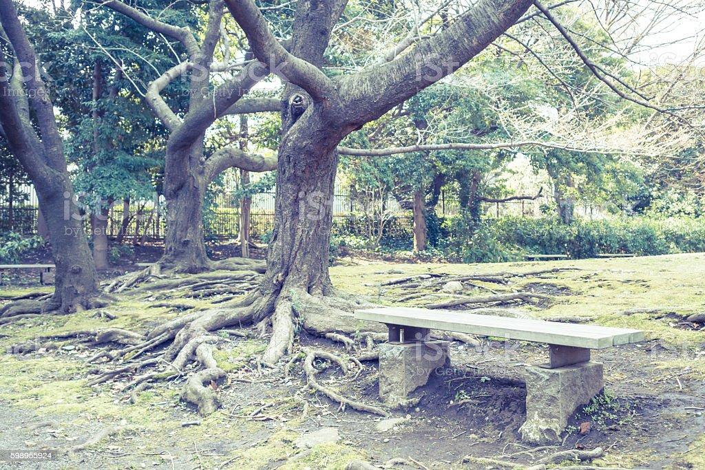 Scenery with the bench / Kyu Shiba Rikyu Garden stock photo