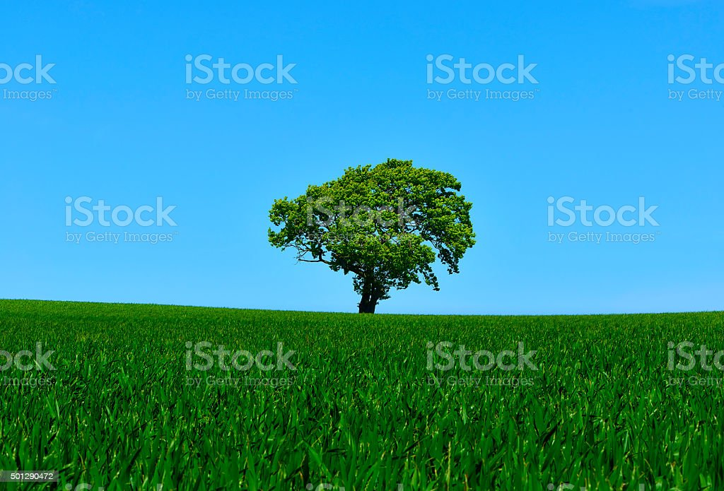 Scenery with tree in wheat field - blue and green stock photo