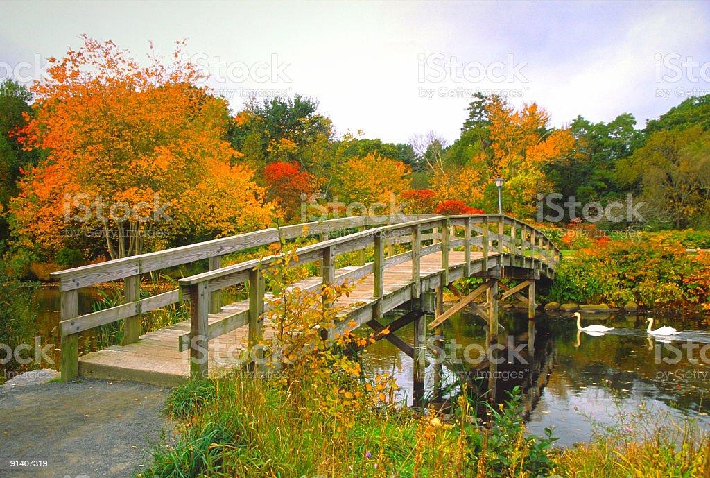 Scenic Autumn bridge with Swans stock photo