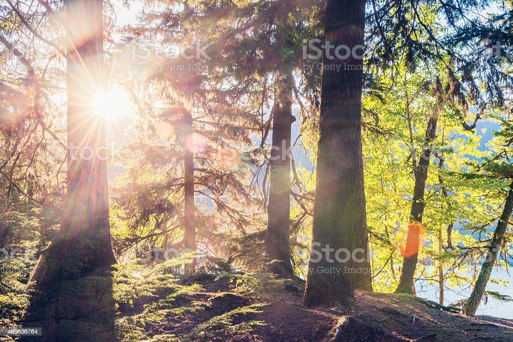 Scenic Autumn Forest Sunset Glacier National Park Montana Western USA stock photo