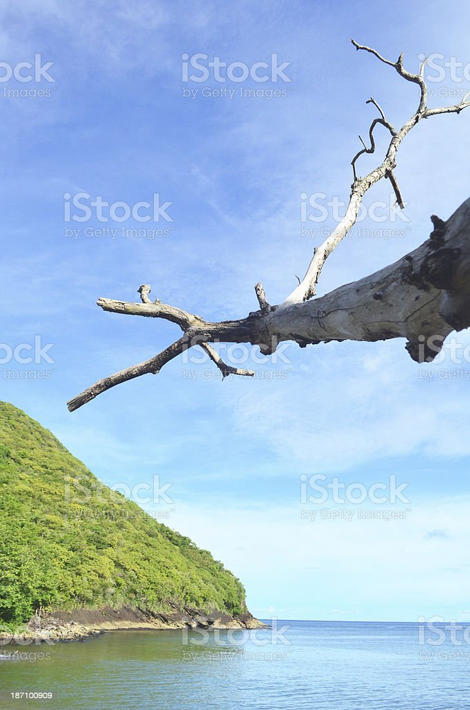 Scenic blue sky green hill beach and twig stock photo