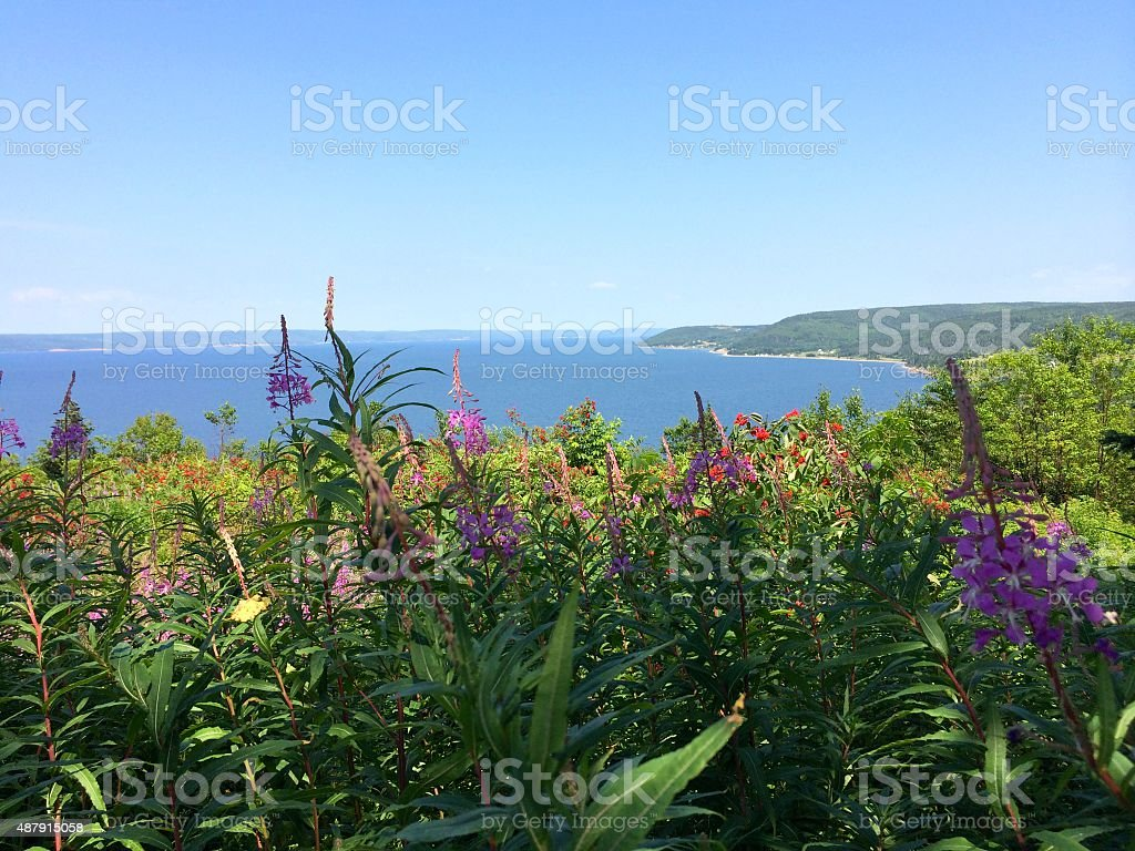 Scenic Cape Breton Landscape with Bras D'or Lake and wildflowers. stock photo