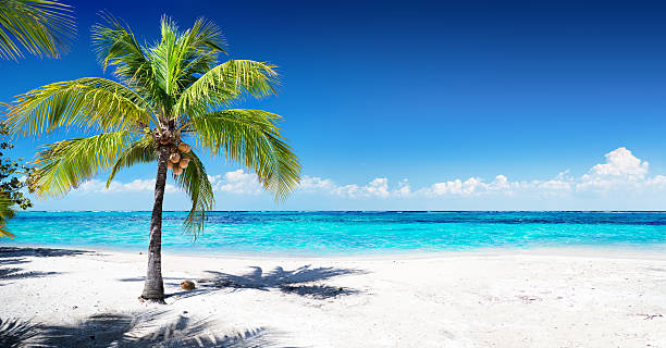 Palm Trees On The Beach: Palm Tree Pictures, Images And Stock Photos