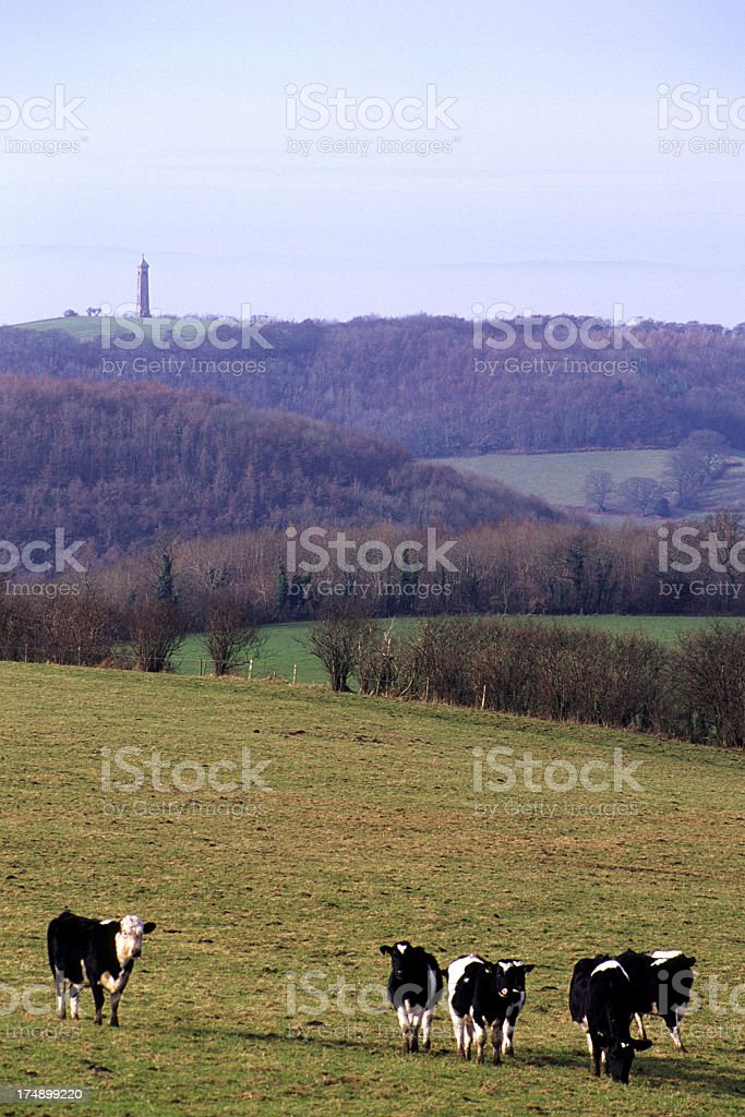 Scenic Cotswolds - Rural countryside royalty-free stock photo