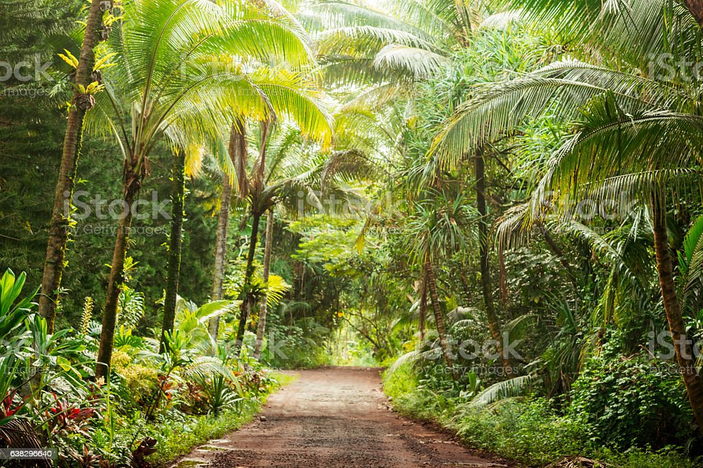 Scenic Empty Dirt Road in Rural Tropical Kona Hawaii  USA stock photo