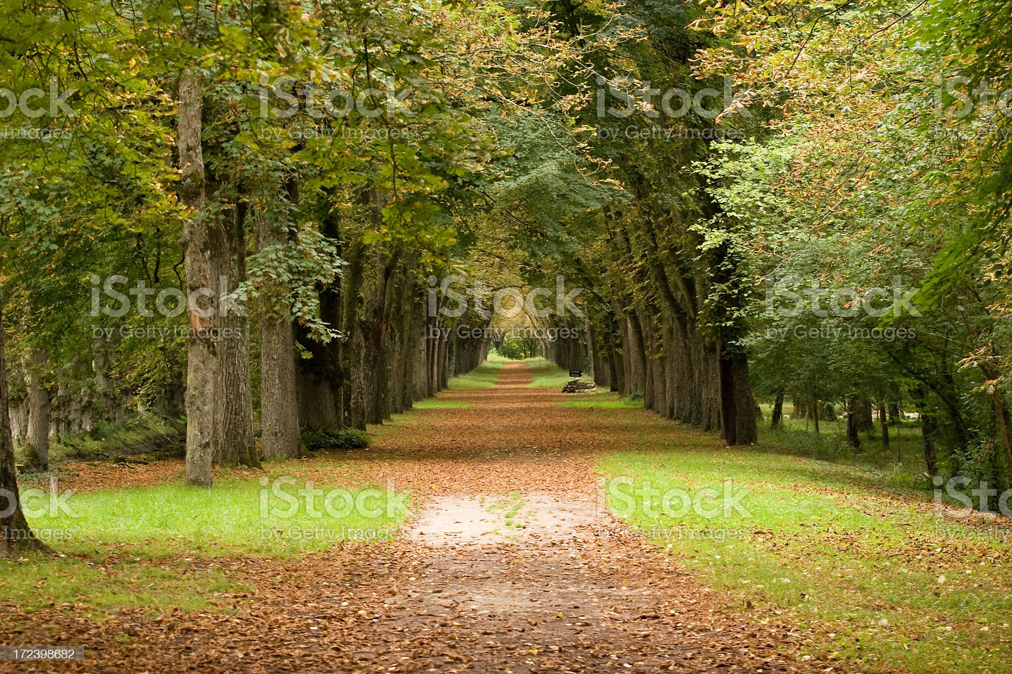 Scenic Fall Trail with Trees royalty-free stock photo