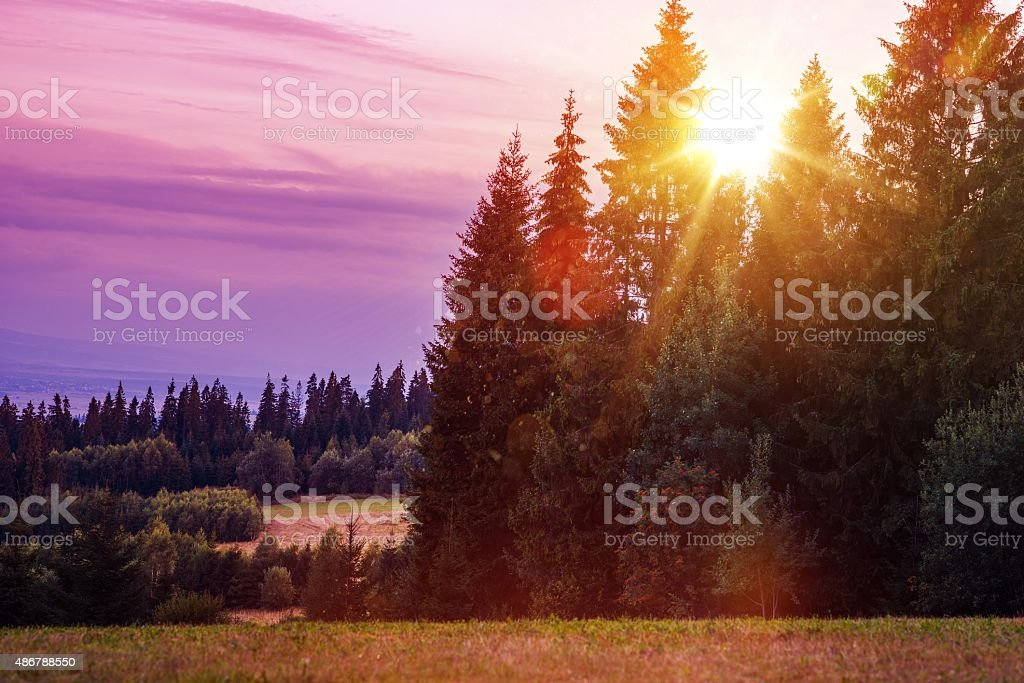 Scenic Forest Edge Sunset stock photo