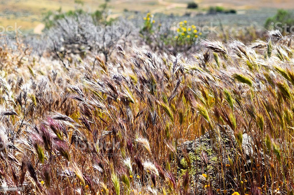 Scenic Grass foto stock royalty-free