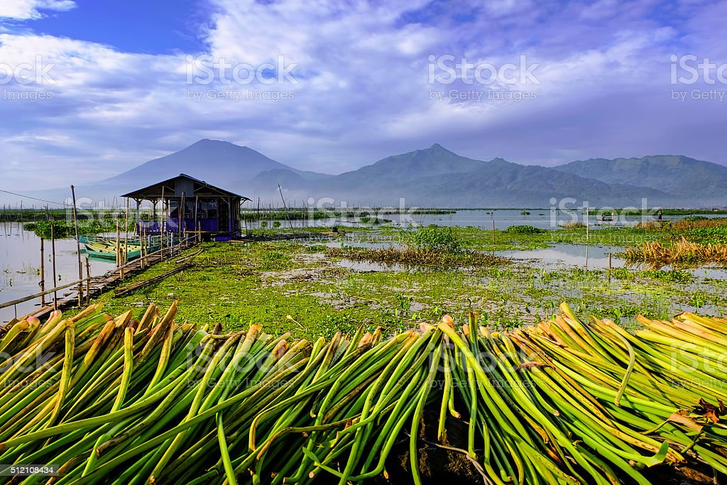 Scenic Indonesia Lake Landscape with Mountain and Water Plant stock photo
