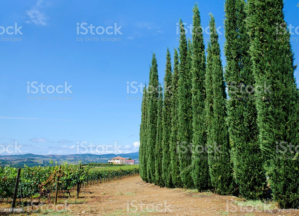 scenic landscapes of Tuscany. Italy stock photo