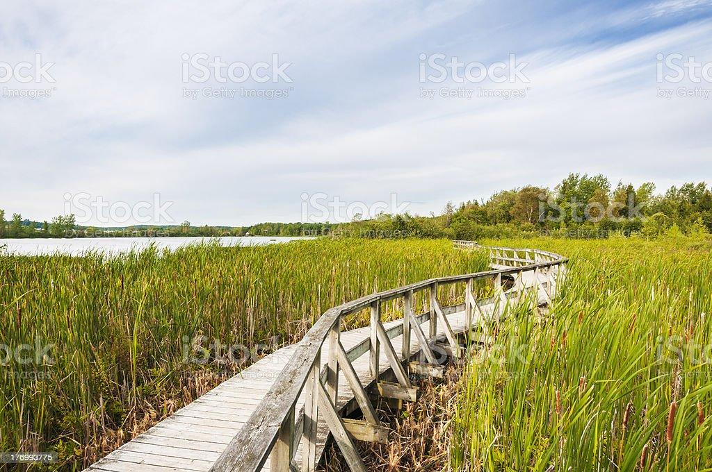Scenic Marsh Boardwalk royalty-free stock photo