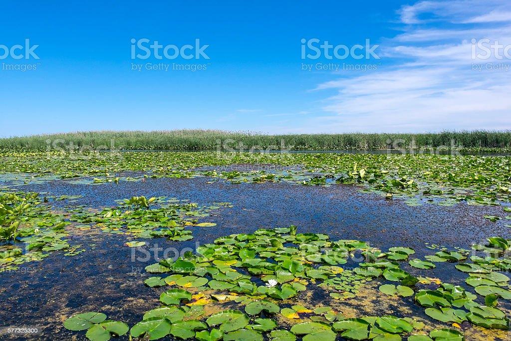 Scenic Marsh Landscape and Blue Sky stock photo