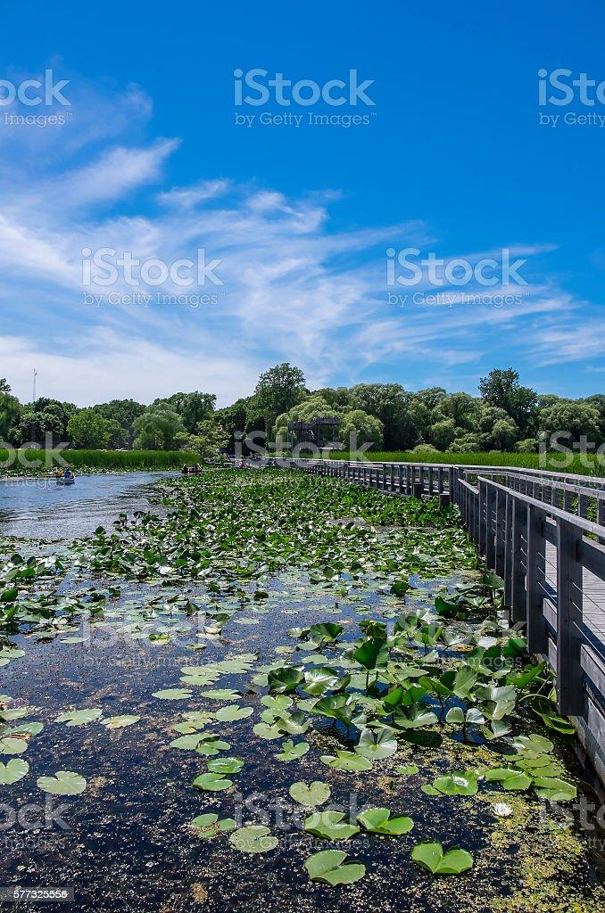 Scenic Marsh Landscape stock photo