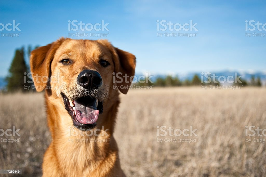 Scenic mountain portrait of mixed breed dog stock photo