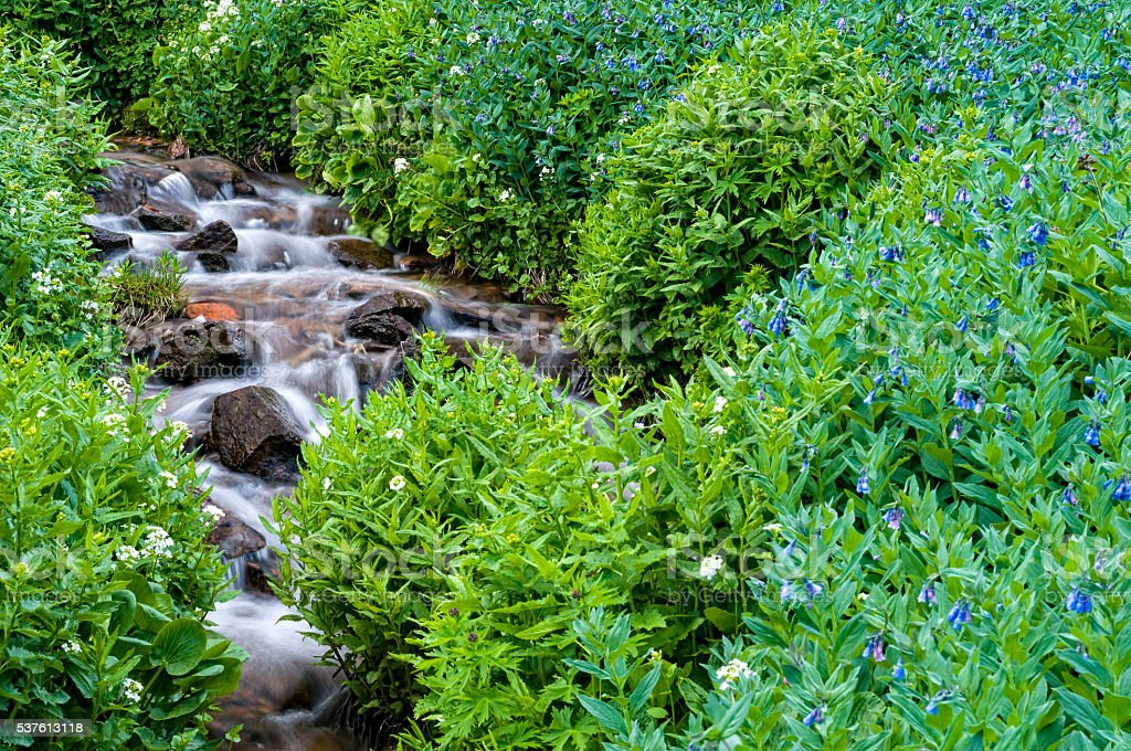 Scenic Mountain Stream in Spring Summer stock photo